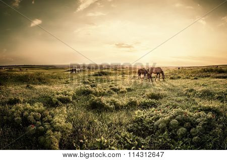 Sunset Over Spring Meadow