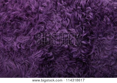 violet tanned leather texture, decorated with fur