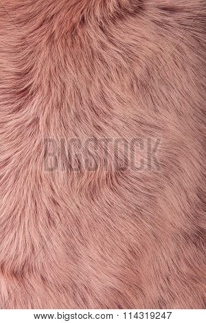 Close up of a pink dyed sheepskin