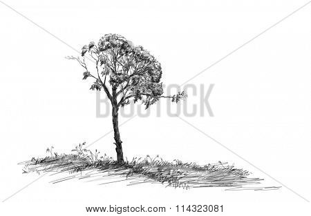 Charcoal sketch of tree on grass field
