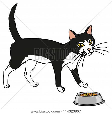 Black And White Cat With Food