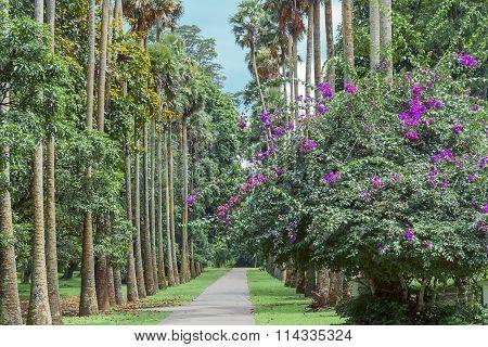 Botanical Garden In Kandy