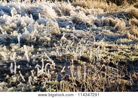 Iced over grass in an abstract beautiful form.