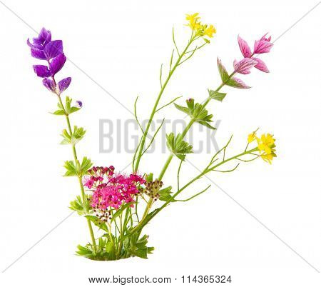 Bundle of small flowers isolated on white background