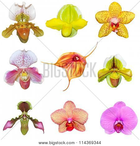 Set of fresh orchids isolated on white background