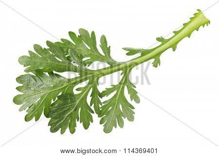 Single edible chrysanthemum leaf isolated on white