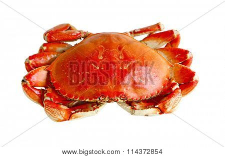 Boiled prepared crab isolated on white background