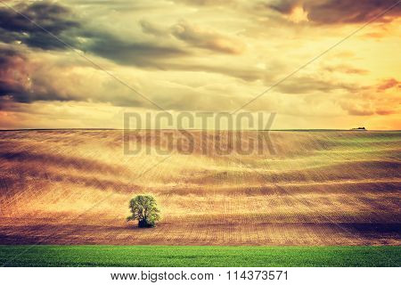 Vintage Landscape With Lonely Tree