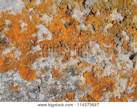 Orange lichens on a light grey stone