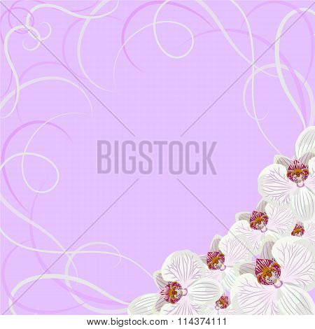Decorative frame with orchid flowers.