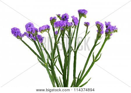 Limonium sinuatum Statice Salem flower isolated on white background