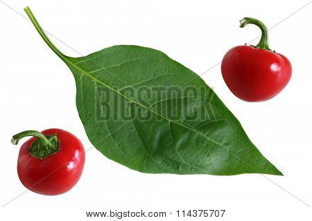 Two red hot cherry pepper fruits and green leaf