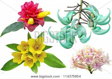 Collection of tropical flowers isolated on white background