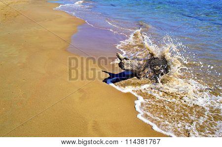 waves hitting on the stump