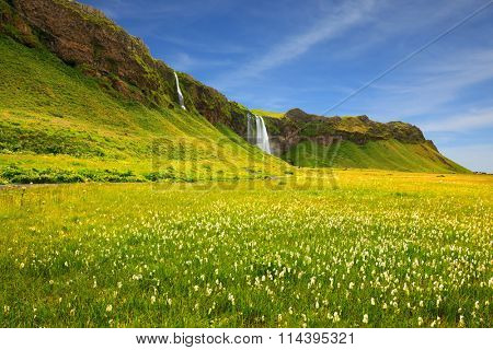 Seljalandsfoss waterfall and picturesque flowering fields and streams. Iceland in July. Warm summer day