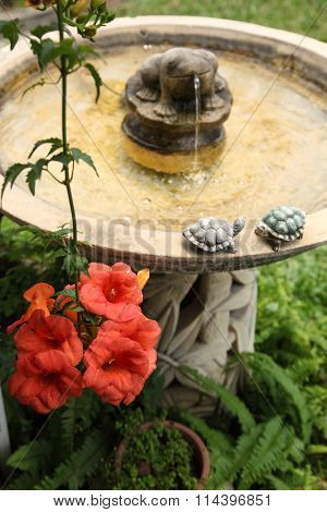 garden with flower and frog shaped water feature