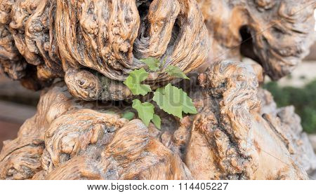 Ecology Concept And Success As An Old Cut Down Tree And A Strong New Life Plant