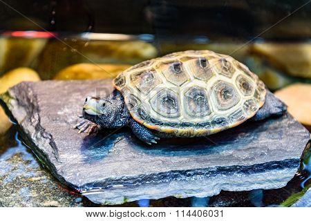 Sea Turtle Superfamily