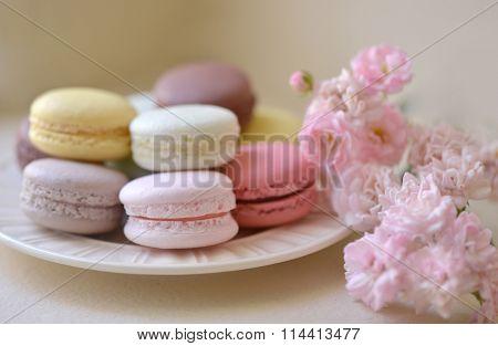 macaron rose pastal