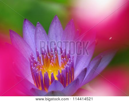 Waterlily Colors