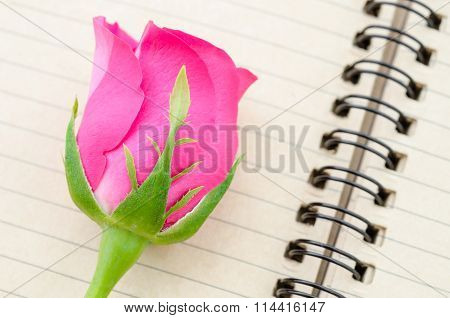Pink Rose And Diary.