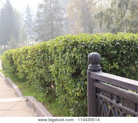 Green Live Fence.