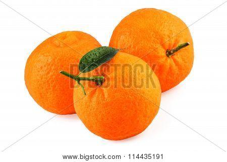 Tangerine Mandarin Fruits Isolated on White