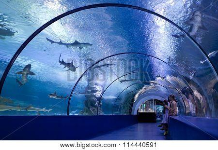 ANTALYA TURKEY - JUNE 16: Children inside the tunnel of the oceanarium at the aquarium on June 16 2015 in Antalya Turkey