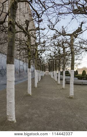 regimented trees in Belgium