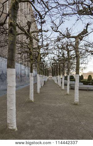 regimented trees in Belgium