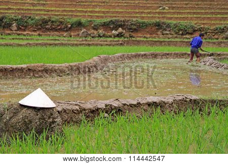 asian conical hat against the background of paddy field