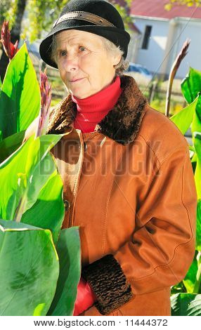 Old Woman Between Leaves