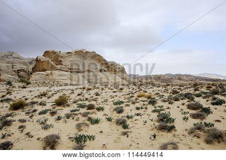 Winter Desert Landscape, Jordan