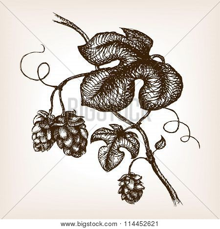 Branch of hops hand drawn sketch style vector