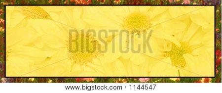 Banner Yellow Flowers