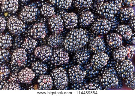 Ripe blackberries background