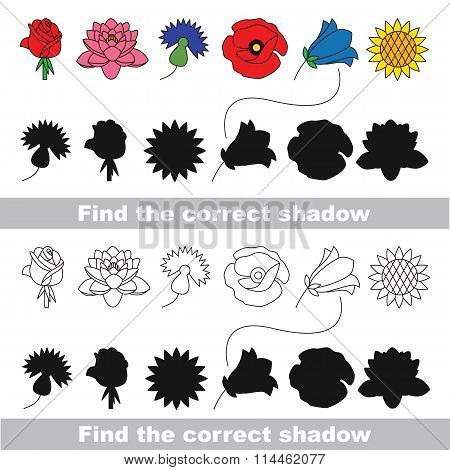 Flower set. Find correct shadow.