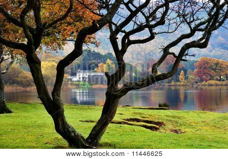 Bare Tree & House By Lake