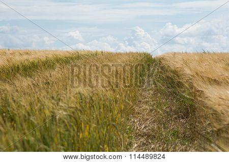 Road Through The Wheat Field