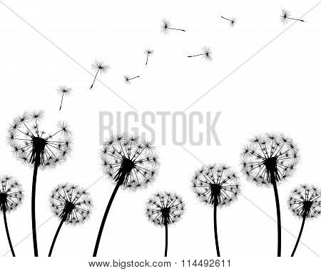 Background Dandelion Faded Silhouettes On A White Background