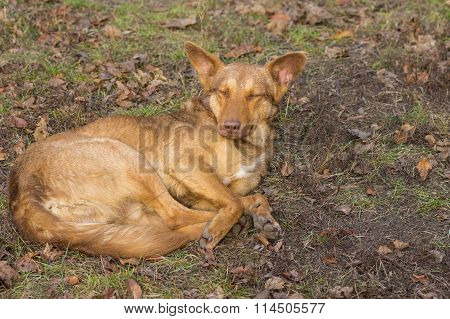 Stray dogs having rest outdoors
