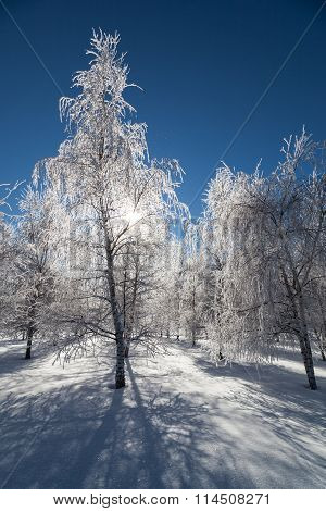 Frozen Crystal Trees