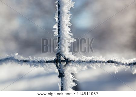 Ice Crystals On A Fence