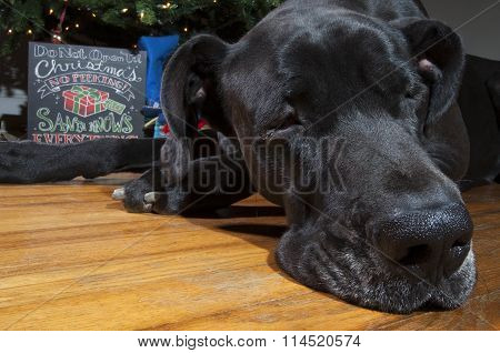 Holiday Exhaustion