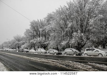 Cars And Trees Covered In Snow