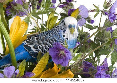 parrot in  flower