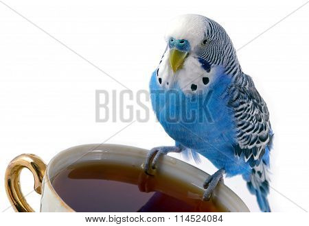 parrot and cup with tea