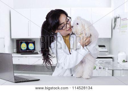 Veterinarian Checks The Maltese Dog Cleanliness
