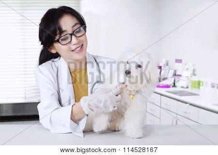 Veterinarian Combing The Dog Fur