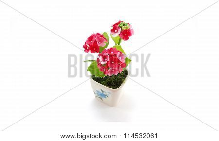 Miniature pink flower on white background